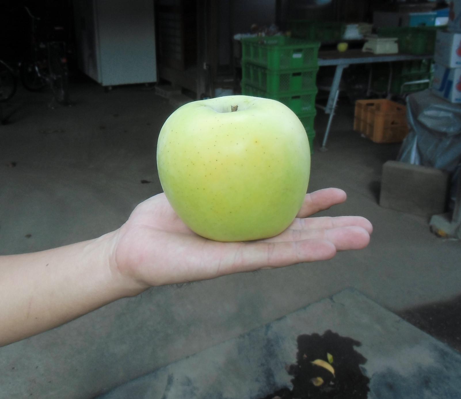 浜りんご最後の品種「シナノゴールド」
